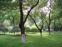 北京大学校园绿化